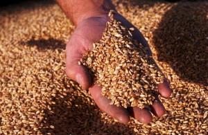 SAFRA DE GRÃOS : Produção de 225,6 milhões de toneladas é a segunda maior da história